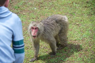 aapje is niet blij