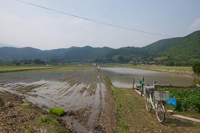 rijstvelden tussen Osawa-Ike meer en Hirosawa-no-Ike meer.