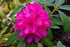 Flower at Kokoen 好古園