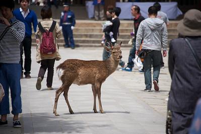 hertje in Nara