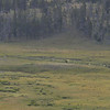 A couple of moose way down in the valley.  Too far away to get a good picture - but they were there!