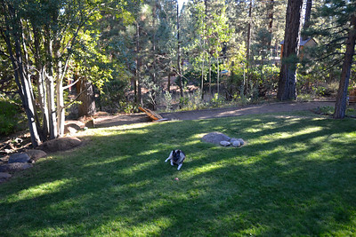 Kal in the yard in Tahoe