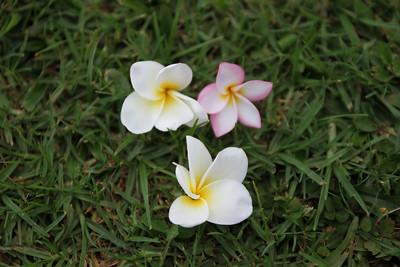 Kauai Apr 2010