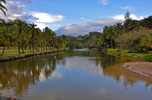 Looking mauka up the river at Allerton Garden. I'm standing on the river bridge (you can see it in photo 44) with the beach behind me.