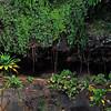 Allerton Garden, cave