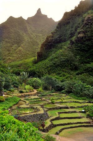 Limahuli Garden, terraced taro patches