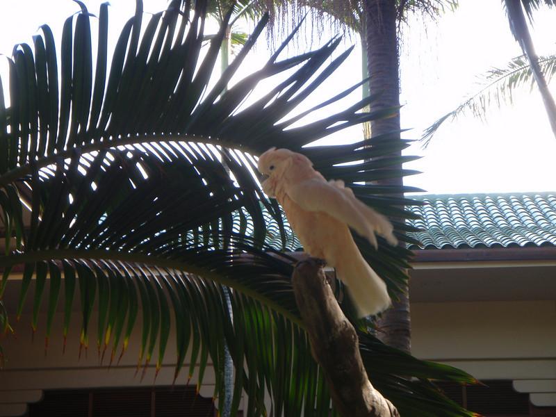 Grand Hyatt Kauai Courtyard