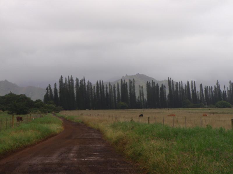 Kipu Ranch