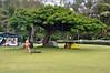 Camping, Hawaii-style (Hanalei Bay, Kauai).
