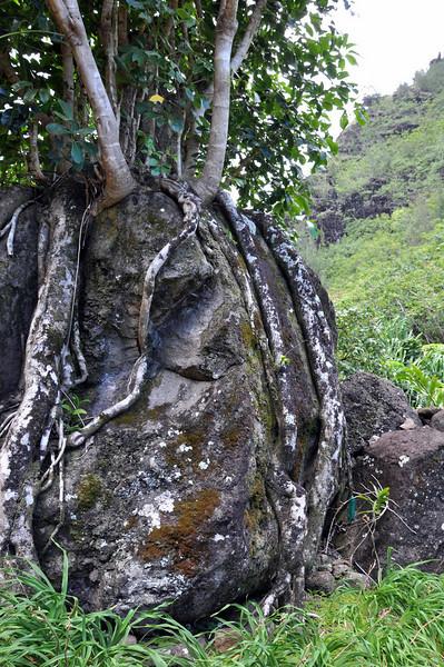 Limahuli Garden and Preserve, Kauai.