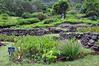 Terraced sections of the Limahuli Garden, Kauai.