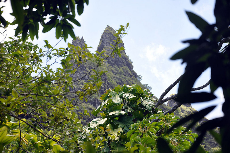 A shot of the peaks through a rare opening in the thick foliage of the Kalalau Trail.