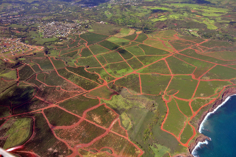 This is largest coffee plantation in the U.S., located in southern Kauai.