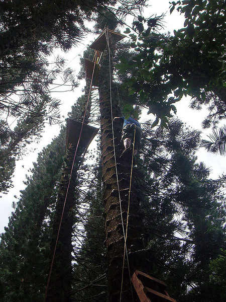 Rick is heading up a tree, opposite Wendy, also toward the 100 ft top platform. Of course there are no guard rails on the platform at the top. That would be cheating.