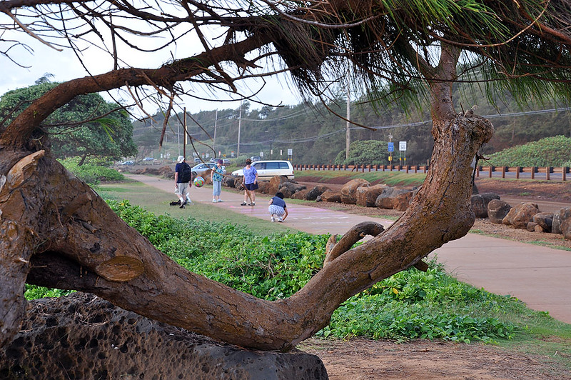 The approximate 2 mile pedestrian/bike trail, near Kapaa, is very close to the water along the eastern coast.
