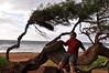 Rick likes this oddly shaped tree, near Kapaa, Kauai (Hawaii).
