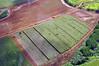 Kauai fields near Kapaa and Lihue on the eastern side.