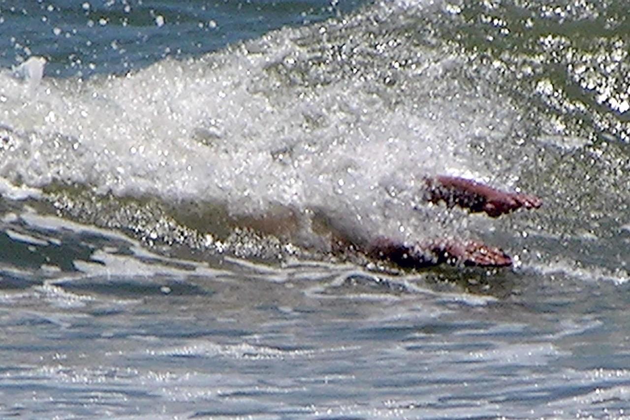 August 2004 - Jason riding a wave