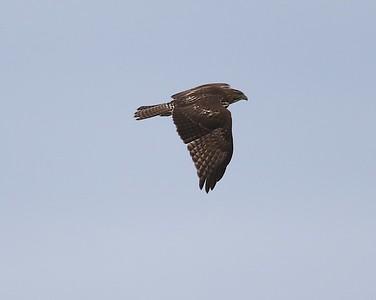 Klamath Lake trip birds Jan2016  080