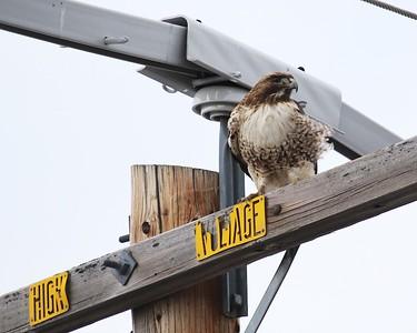 Klamath Lake trip birds Jan2016  087