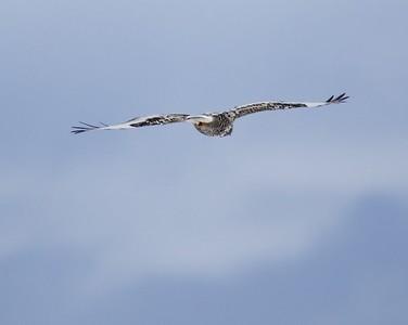 Klamath Lake trip birds Jan2016  073