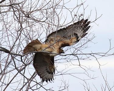 Klamath Lake trip birds Jan2016  030