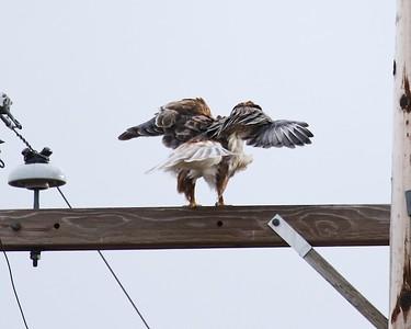 Klamath Lake trip birds Jan2016  015
