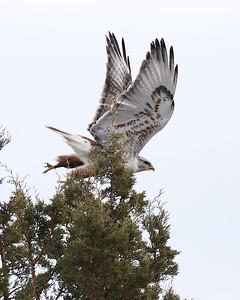 Klamath Lake trip birds Jan2016  066