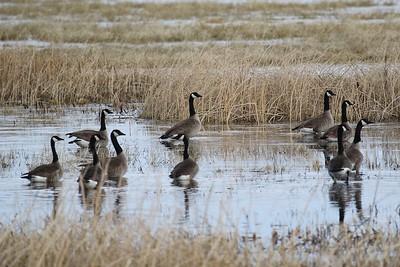 Klamath Lake trip birds Jan2016  043