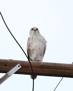 Klamath Lake trip birds Jan2016  004