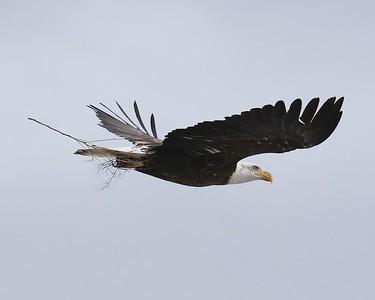 Klamath Lake trip birds Jan2016  096