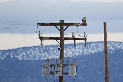 Klamath Lake trip birds Jan2016  061