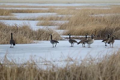 Klamath Lake trip birds Jan2016  047