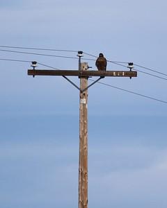 Klamath Lake trip birds Jan2016  019