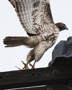 Klamath Lake trip birds Jan2016  287