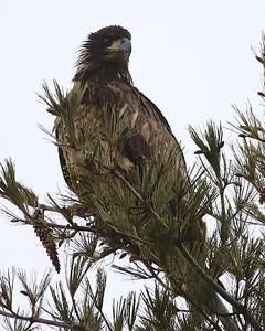 Klamath Lake trip birds Jan2016  282