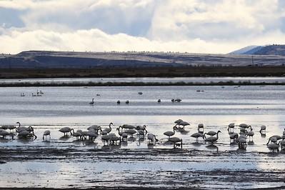 Klamath Lake trip birds Jan2016  532