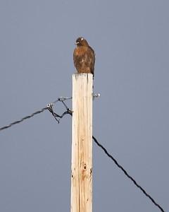 Klamath Lake trip birds Jan2016  414