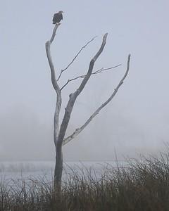 Klamath Lake Mar8-10  0014