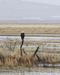 Klamath Lake Mar8-10  0229