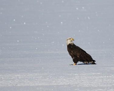 Klamath Lake trip Jan2017  0443