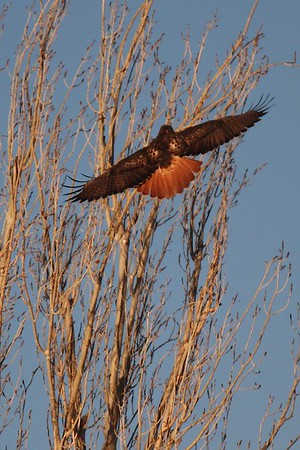 Jan 24th Lower Klamath NWR and Klamath Falls