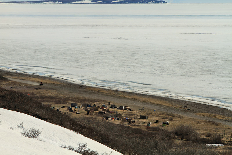 A dog lot on the shores of the Sound.  The land body across the ice s the Bering Land Bridge National Preserve.