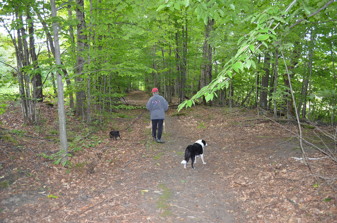 Old stage road - the dogs loved this trail.