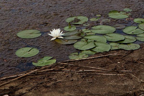 Lake Placid 8_15