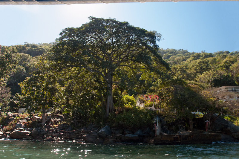 A view from the boat of the stunning Ficus Benjamina (Weeping Fig) tree just as the hike leaves the village.  Almost 100 ft tall.