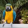 Vegas Parrot