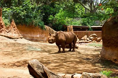Omi's Rhino