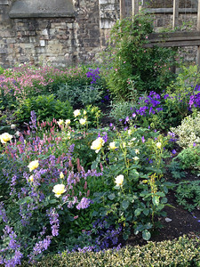 Greyfriars Garden.        See separate gallery for many, many more photos of English plants, gardens, and parks.