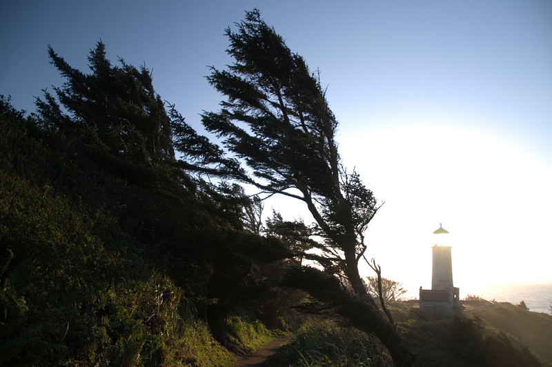 Northhead Lighthouse and tree , August 26th, 2010